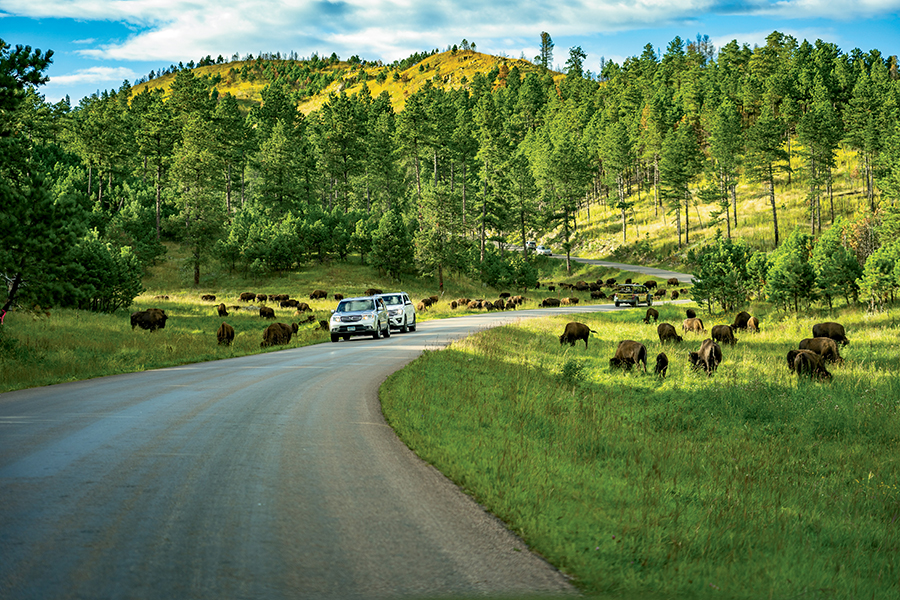 Black Hills, Badlands, and Buffalo Jams