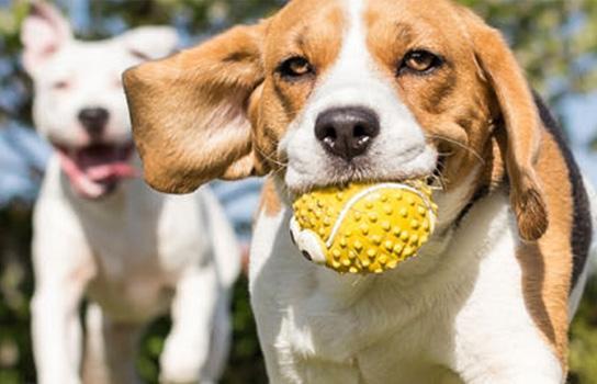 Pet Savings and Tips