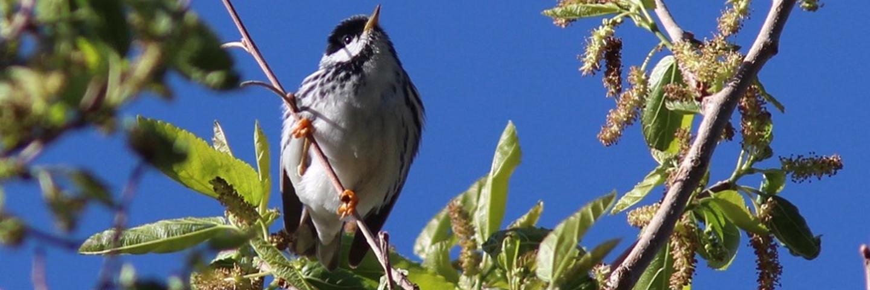 Pikes Peak Birding & Nature Festival