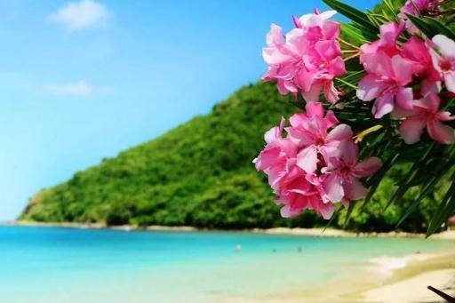 Win a Dream Getaway to Hawaii!