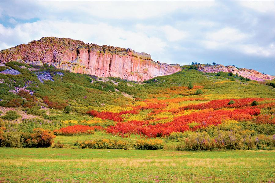 GOLD RUSH 2021: Colorado's Other Fall Colors